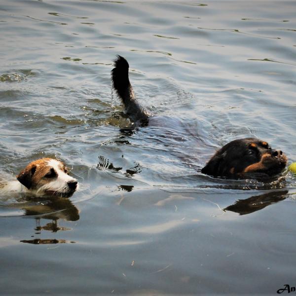 Hodowla Psów Rasowych DAREL - Jack Russell Terrier